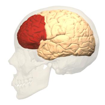 prefrontal-600x600